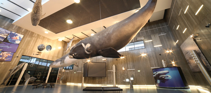 Museo de la ballena en Canical