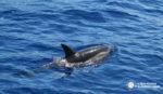 Avistamiento de delfines y cetáceos