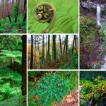 Bosque de Laurisilva, Patrimonio de la Humanidad de la Unesco