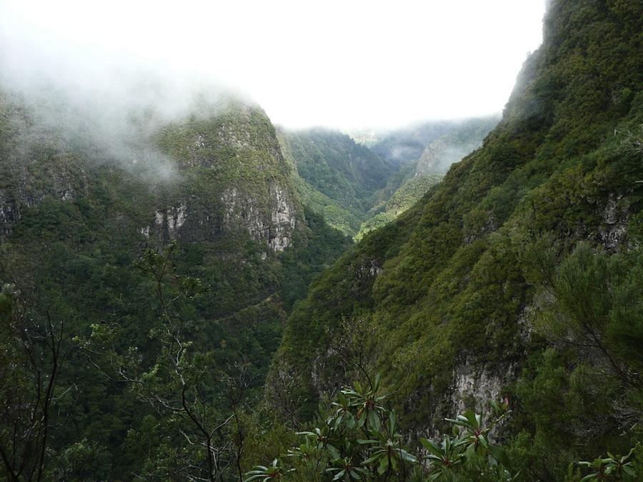 Comienza el festival de la Naturaleza en Madeira, por tierra mar y aire