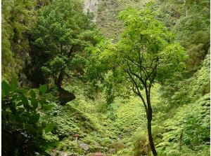 Múltiples tonalidades de verde del bosque de Laurisilva, Patrimonio Mundial de la humanidad por la UNESCO. Foto de erik's fotosite.