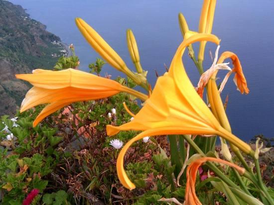 Isla Madeira en facebook